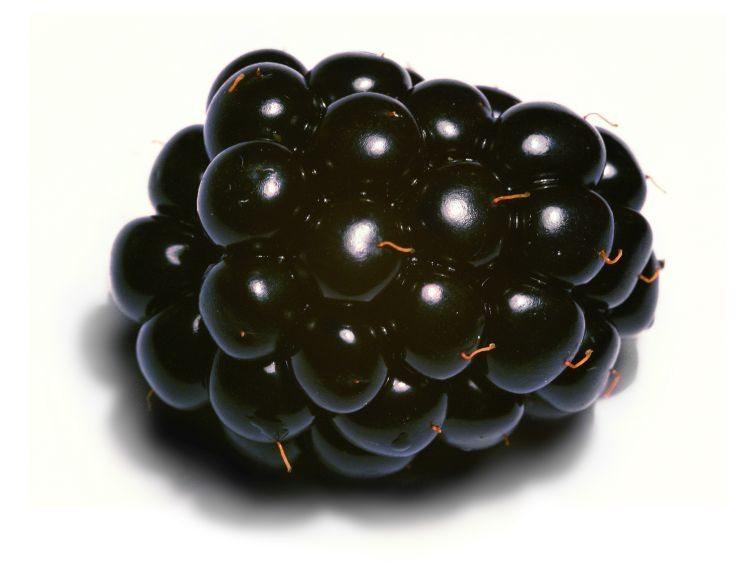 Blackberry_close-up