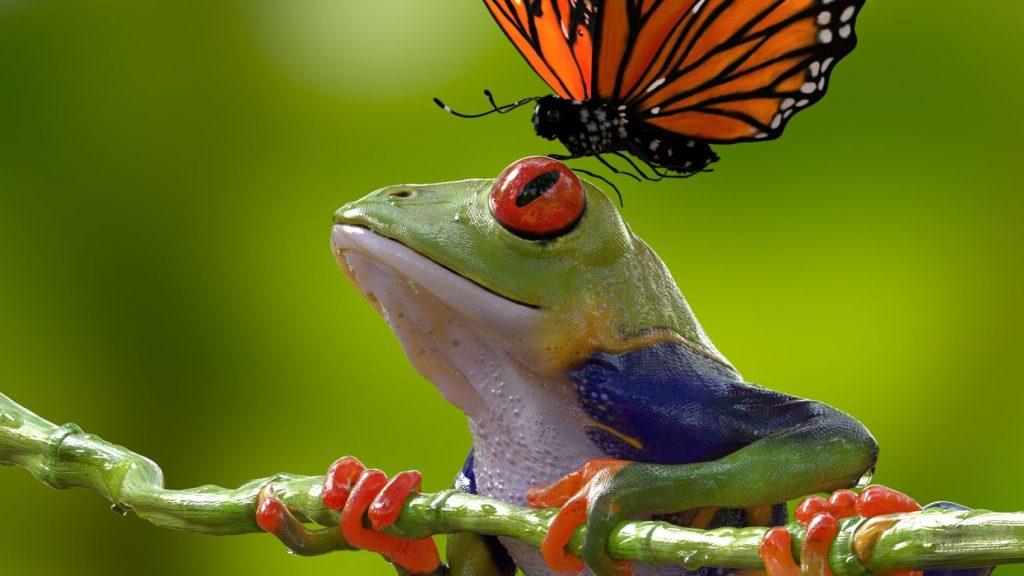 syed-jafri-frogcloseup2