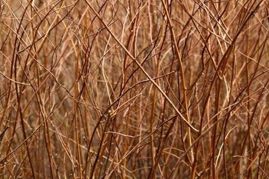 brown_branches_pattern_202968